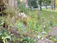Native plants in Fall stage