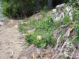 Lakeshore erosion and invasive plants